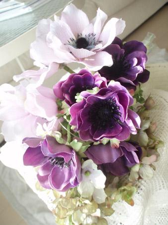 anemone1.jpg