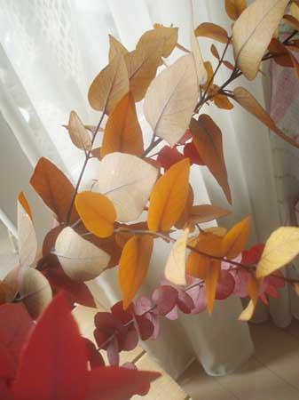 autumncolor.jpg