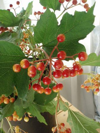 bibanamukonpakutamuberry.jpg