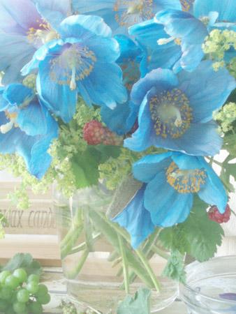 bluepoppy2.jpg