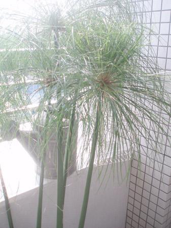 papirusu.jpg